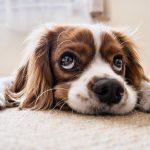 Rouwen om de dood van je geliefde huisdier
