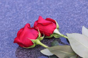 two-red-roses-4210620_640